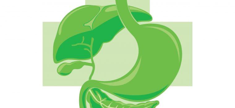לבלב ירוק
