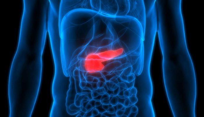 Human,Body,Organs,Anatomy,(pancreas).,3d