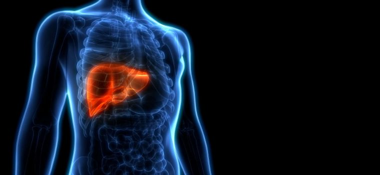 Human,Liver,Anatomy.,3d